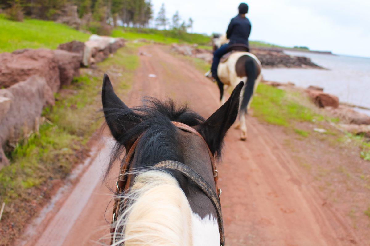 Trail Ride at Fox Harbr