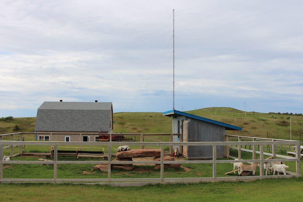 Magdalen Islands Food Trail Goat Farm