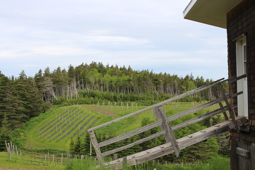 Magdalen Islands Food Trail Winery